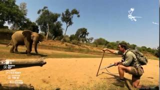 Download Pafuri Elephant Stand Off Video