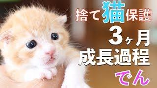 Download 捨て猫でんの成長記録:捨て猫をゴミ袋から保護してからの3ヶ月の成長過程まとめ Video
