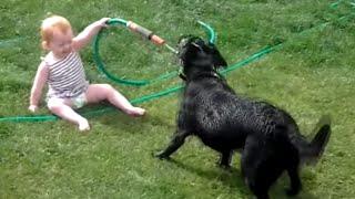 Download Perros felices & Bebés Jugando con la manguera de agua - más feliz del vídeo nunca! Video