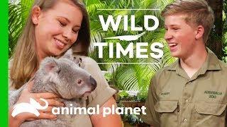 Download Meet Dexter The Cuddly Koala!   Wild Times Video