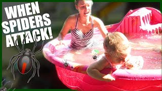Download SPIDERS IN THE SWIMMING POOL! Video