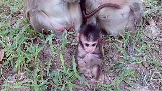 Download Baby monkey with a funny walk Video