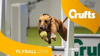 Download Flyball - Team Final | Crufts 2019 Video