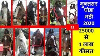 Download मिटटी के घोड़े   ना खायें पकोड़े - मुक्तसर मेला के सस्ते घोड़े - Muktsar Horse Market In Punjab, India Video