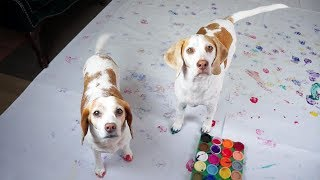 Download Dogs Have Fun Painting: Cute Dogs Maymo & Penny Video