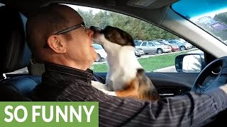 Download Puppy realizes he's at dog park, goes absolutely bonkers Video