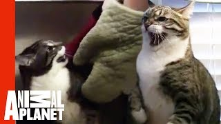 Download Meanest Cat Ever | My Cat From Hell Video