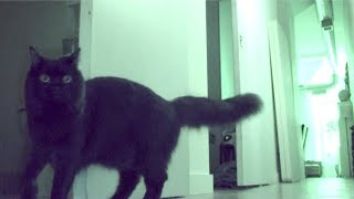 Download Hide & Seek With My Cat Video