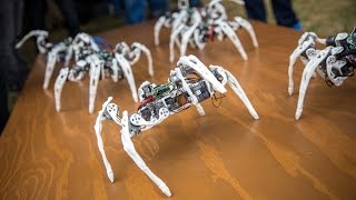 Download Robot Spiders Controlled by Intel's Edison Chip Video