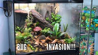 Download Bioactive DART FROG Vivarium UPDATE | Jay Wilson Video