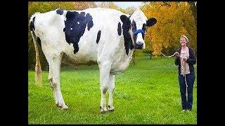 Download LARGEST Animals Found On Land Video