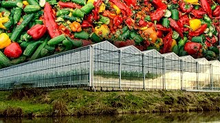 Download How Food Waste is Helping Power Greenhouses | Earth Lab Video