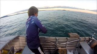 Download Fishing a local reef. Video