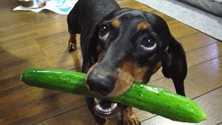 Download If these DOGS won't make you LAUGH, NOTHING will - FUNNY dog compilation Video