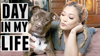 Download A Day In My Life with a Handicap Dog | JaaackJack + ZoeyTheLabPit Video