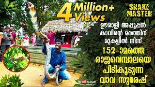 Download Vava Suresh rescues 152nd King Cobra from Oorali Appooppan Kavu tree top   Snakemaster   EP 420 Video