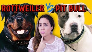 Download ROTTWEILER x PIT BULL Video