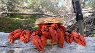 Download Making a Crawfish Sandwich - Catch n' Cook Crawfish! Video