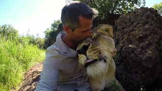 Download How A Lion REALLY Roars! #AskMeg | The Lion Whisperer Video