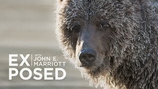 Download EXPOSED Ep. 7: Wildlife Photography | Ice Grizzlies of the Yukon Video