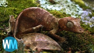 Download Top 10 Animals With Amazing Camouflage Video