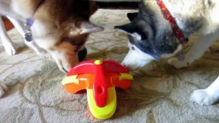 Download Treat Triad Puzzle Toy - Kyjen - Siberian Husky Approved - Boycott Boring Dog Toys Video