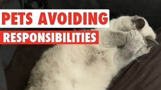 Download Pets Avoiding Responsibilities Video Compilation 2016 Video