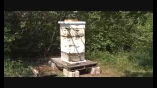 Download Bee Hives Not Opened for 10+ Years Scottsbluff, Nebraska Video