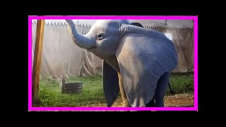 Download Breaking News | First look at Dumbo from Tim Burton's live-action movie Video