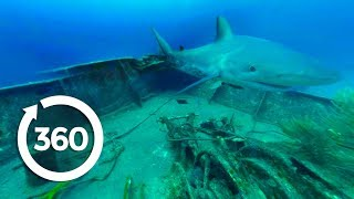 Download MythBusters: Sharks Everywhere! (360 Video) Video