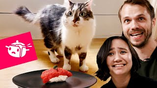 Download We Tried To Make Sushi For Our Cats • Eating Your Feed • Tasty Video