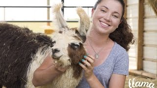 Download Llama Nation Kickstarter Video Video