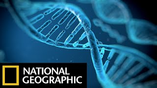 Download DNA Genesis - The Children Of Adam - National Geographic Documentary Films - Full HD Documentaries Video