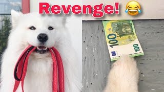 Download How I Got Tricked By My Dog Video