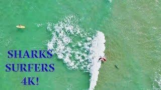 Download Surfer Falls on SHARK!!!   Amazing 4K Drone Footage   DJI Mavic Air Video