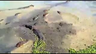 Download सावित्री नदी महाड पहा थक्क व्हाल बापरे कठिणच कठीण 😷 see no end Video