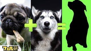 Download 【衝撃】ありえないくらいかわいいミックス犬8選 Video