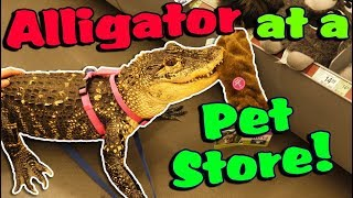 Download My Alligator Picks out a New Toy at the Pet Store! Video