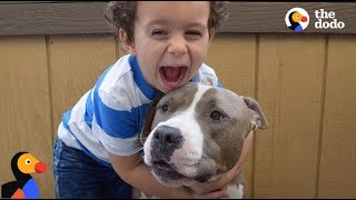 Download Pit Bull Dog is Boy's Best Friend & Nanny | The Dodo Video