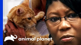 Download Woman Faces Her Fears, Pets Cat for First Time in 47 Years Video
