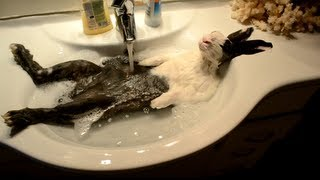 Download Bunny takes a shower [ORIGINAL VIDEO] Video