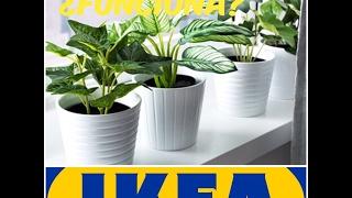 Download PLANTAS ACUÁTICAS DEL IKEA ¿FUNCIONAN? |HD| Video