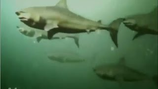 Download All Creature Effect Sequences #2: Dam Sharks Video