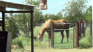 Download Getting Rid Of The Bit - Going From Horse Bit To Bitless - Part 1 Of 3 Video