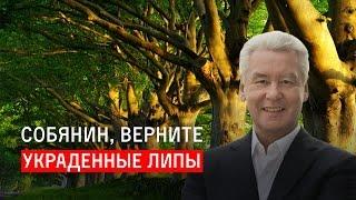 Download Собянин, верните украденные липы Video