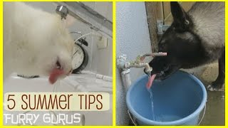 Download 5 Tips to keep your Pets Cool in Summer Video