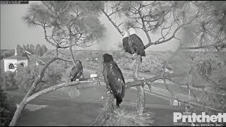 Download SWFL Eagles ~ All Four Together ~ E10 Wants to Sit Next To Dad 3.17.18 Video