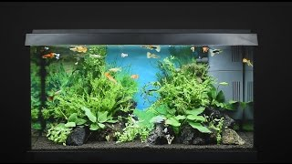 Download Juwel Aquarium Primo 60 - 60l Einrichtungsbeispiel / Tutorial Video