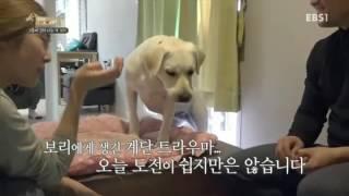 Download 세상에 나쁜 개는 없다 - 2층에 갇혀 사는 개 보리 #002 Video