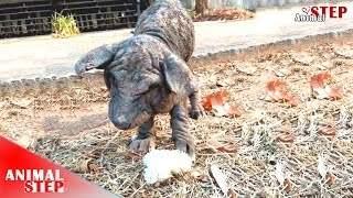 Download Poor Homeless Dog Eats Only Food on Trash for Everyday's Life Video